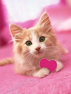 Cute cats images for profile picture