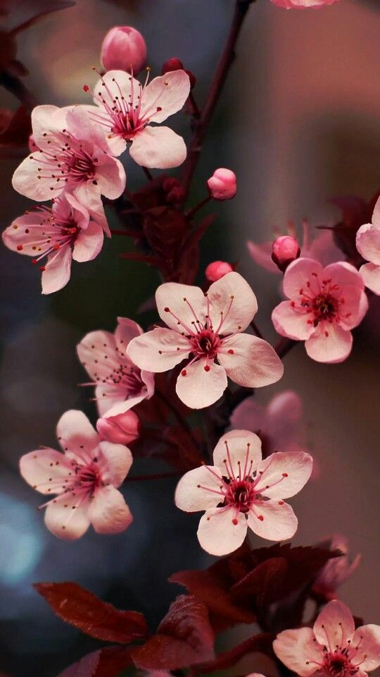 flower profile pictures