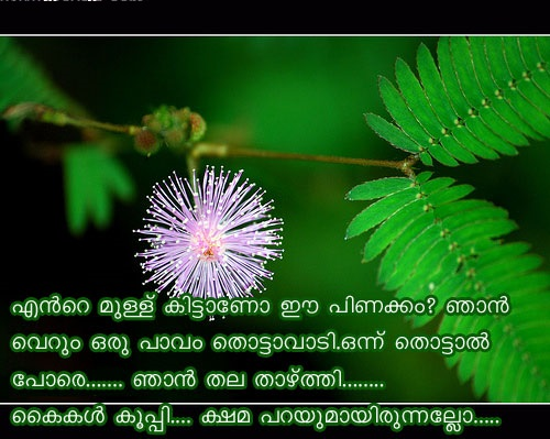 Malayalam Love Quotes For Facebook Whatsapp Malayalam Love Dp For Amazing Whats App Malayalam New Dp