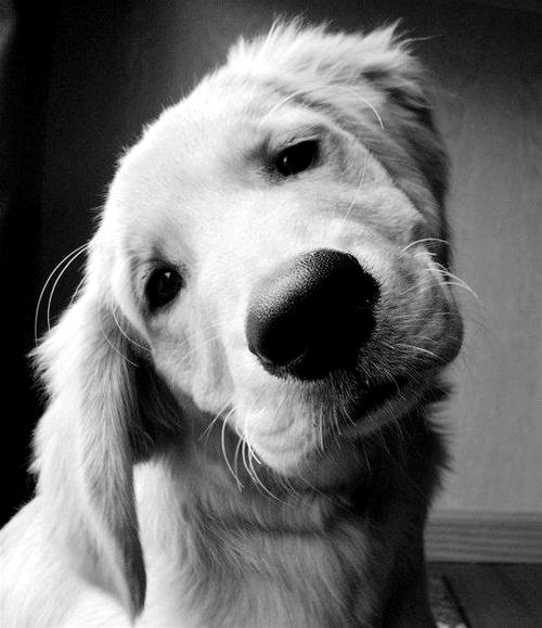 Pets profile pictures