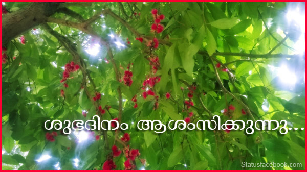 malayalam good morning status