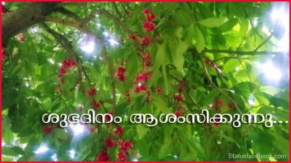 malayalam good morning status